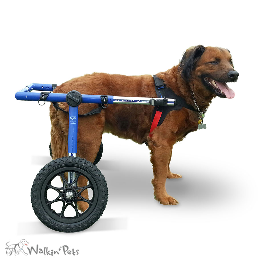 Cadeira De Rodas Walkin Wheels Para Caes De Porte Grande Smartvet