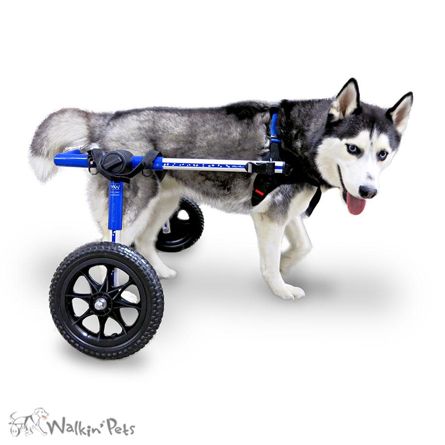 Cadeira De Rodas Walkin Wheels Para Caes De Porte Medio Smartvet